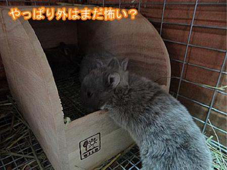 10_20120504181218.jpg