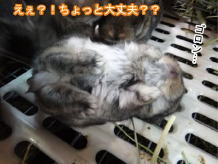 11_20120504181446.jpg