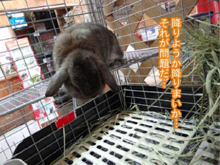 11_20120525170345.jpg