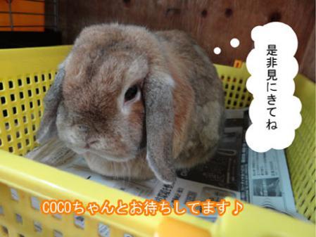 18_20120518184336.jpg
