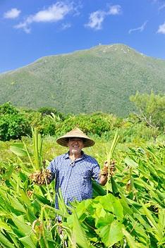 ハルサ農園でウコンを収穫中だった高則氏