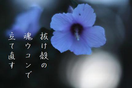 あきの花(木槿)文字入り