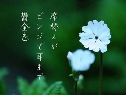サクラソウ(花言葉初恋)文字入2