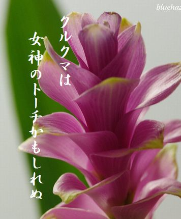 クルクマ4文字入