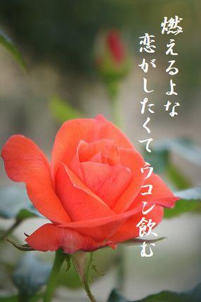 バラ(ピンク)4文字入
