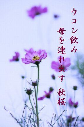 コスモス7文字入