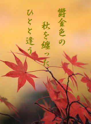 カエデ文字入