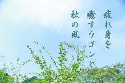 はぎの花(秋の七草)文字入