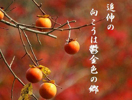 かき(落柿舎)文字入