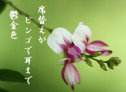 はぎの花4文字入新