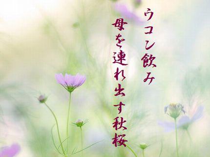 コスモス8文字