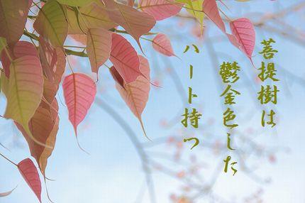 ぼだいじゅの葉(ピンク)文字