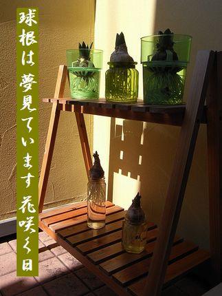 きゅうこん(ヒヤシンス/水仙)文字