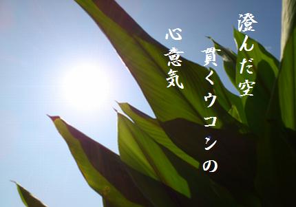 ウコンと空文字