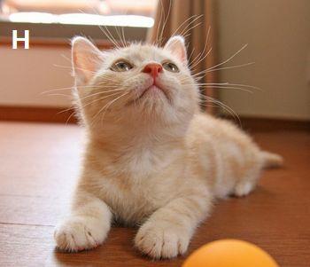 ネコ(ちびネコ)350