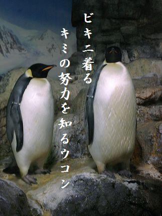 ペンギン(皇帝ペンギン)収穫祭