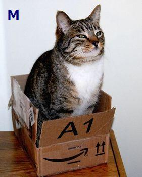 ネコと箱350