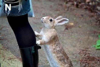 ウサギ(行かないで)350