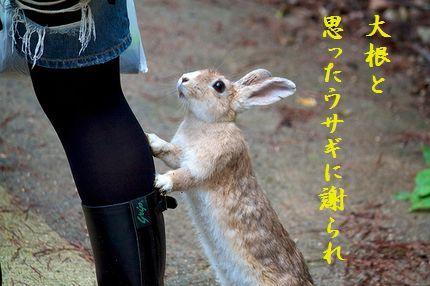 ウサギ(行かないで)爆笑
