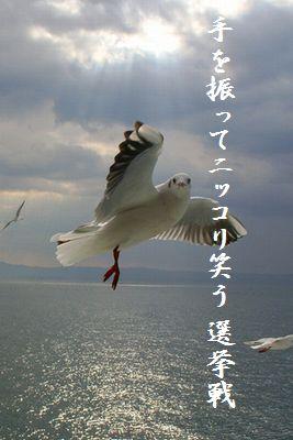 カモメ(手を振る)胸キュン