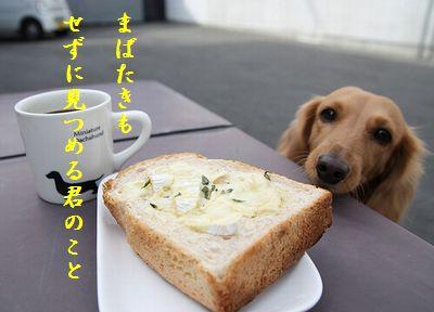 いぬとトースト胸キュン