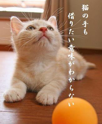 ネコ(ちびネコ)胸キュン