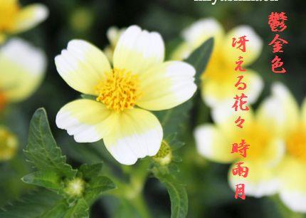 あきの花(ウィンターコスモス)文字