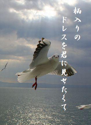 カモメ(手を振る)114吟遊