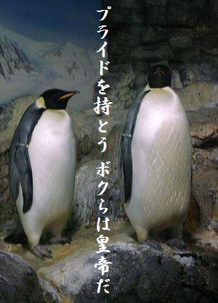 ペンギン(皇帝ペンギン)114教訓