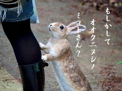ウサギ(行かないで)114