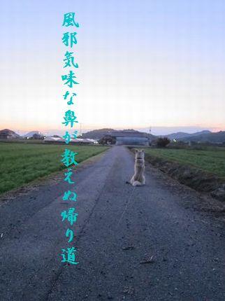 いぬ(帰りを待つ)114