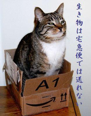 ネコと箱中114