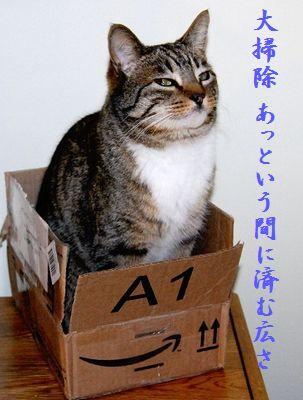ネコと箱中114大掃除