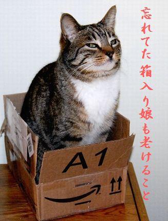 ネコと箱中114そう来たか