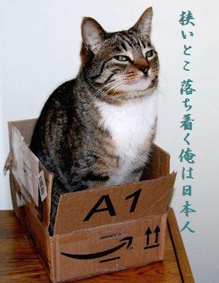 ネコと箱中114狭いとこ