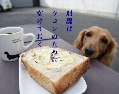 いぬとトースト別腹