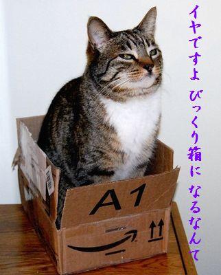 ネコと箱中びっくり箱