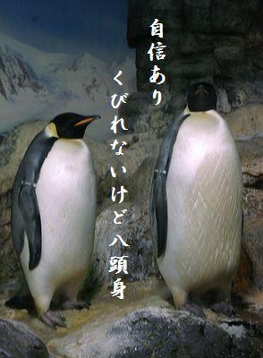 ペンギン(皇帝ペンギン)八頭身