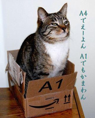 ネコと箱中A4