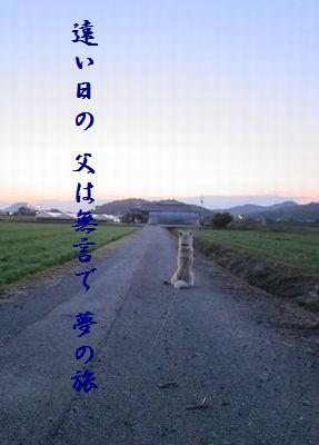 いぬ(帰りを待つ)夢の旅