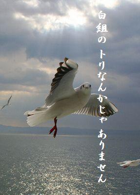 かもめ(アップ)白組トリ
