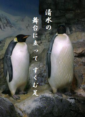 ペンギン(皇帝ペンギン)清水舞台
