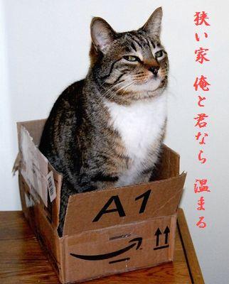 ネコと箱中狭い家温まる