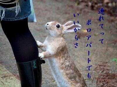 ウサギ(行かないで)ボロアパート