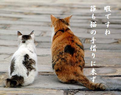 ねこ(デート)猫の手借りに来ず