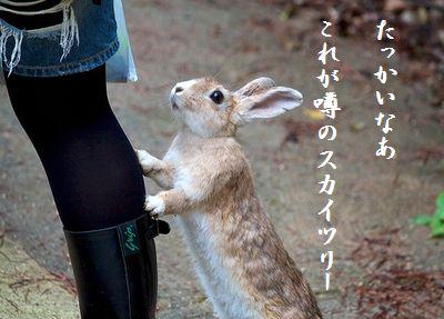 ウサギ(行かないで)スカイツリー