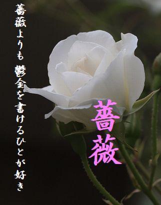 バラ(白)10月秀作