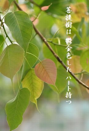 ぼだいじゅの葉(ハート形)10月花新
