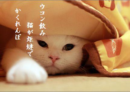 ネコとこたつ文字入