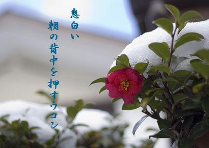 つばき(雪)文字
